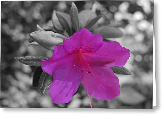 Pink Flower 2 Greeting Card