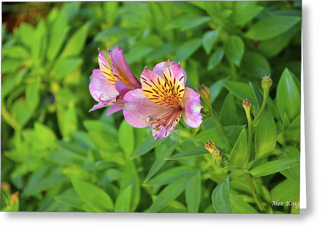 Pink Flower Greeting Card by Alex King