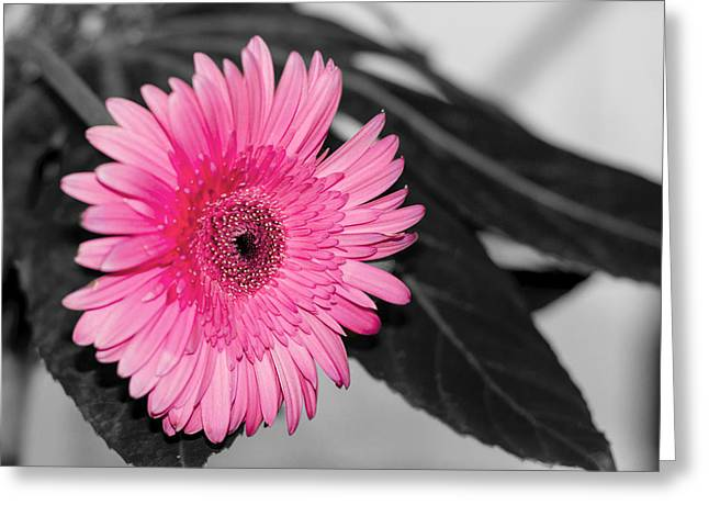 Pink Flower Greeting Card by Amr Miqdadi