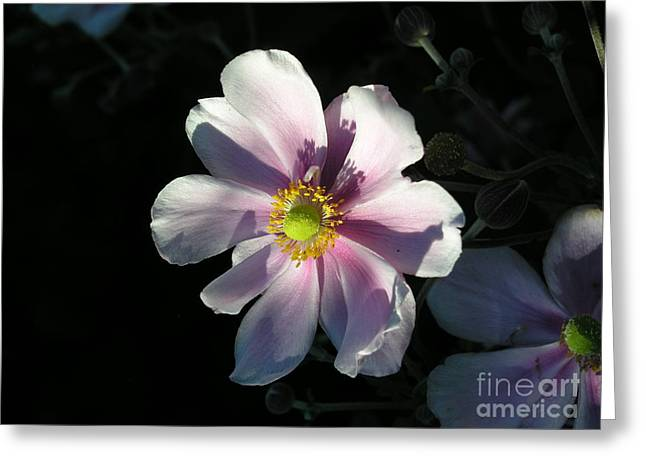 Pink Flower Greeting Card by Bev Conover