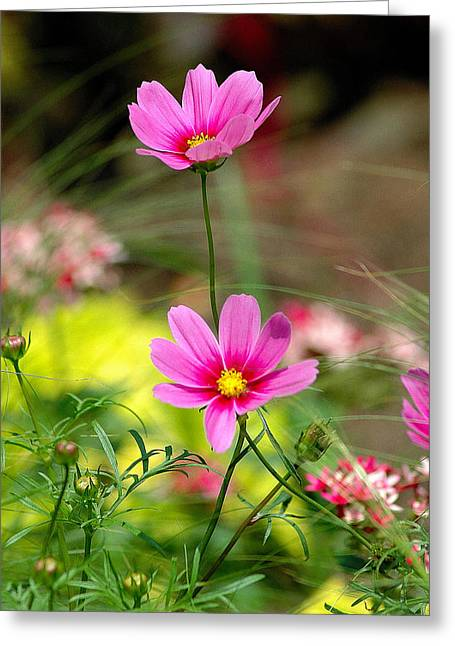 Pink Flower Greeting Card by Ed Roberts