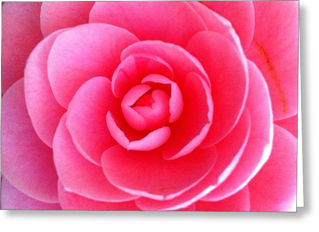 Pink Flower From Garden Greeting Card by Beril Sirmacek