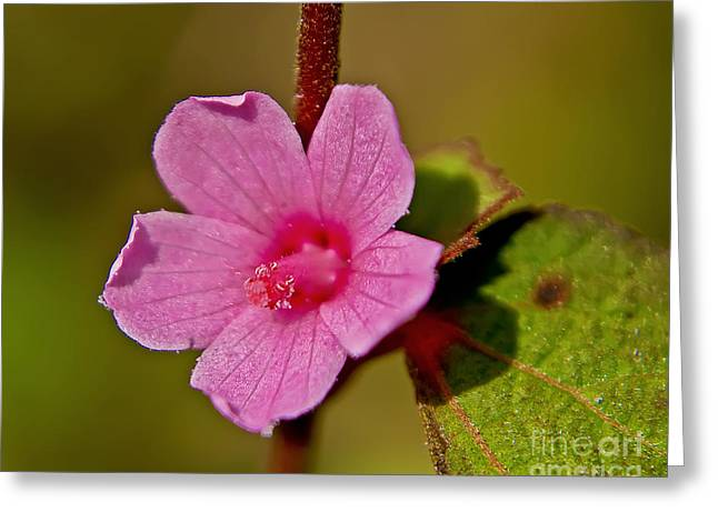 Greeting Card featuring the photograph Pink Flower by Olga Hamilton