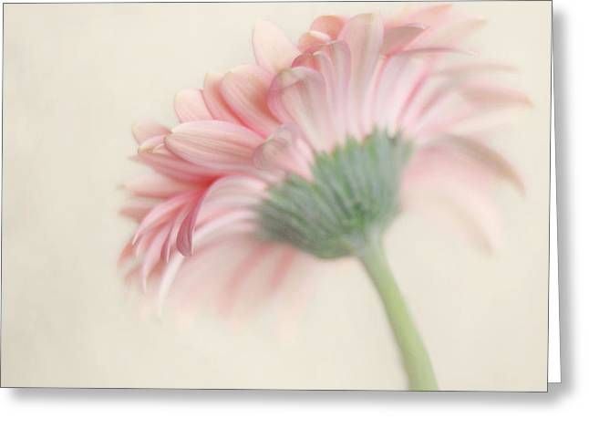 Pink Flower Photography - Pink Nursery Wall Art - Baby Girl Nursery Art - Pale Pink Mint Green Decor Greeting Card by Amy Tyler