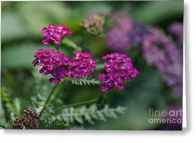 Pink Flower Greeting Card by Zori Minkova
