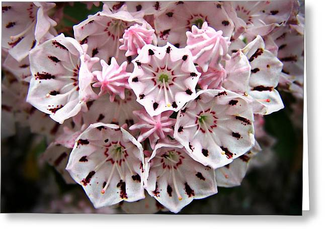 Greeting Card featuring the photograph Pink Flowered Mountain Laurel by William Tanneberger