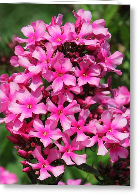 Pink Flowers Greeting Card by Bill Woodstock