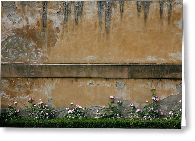 Pink Flowers Growing On An Old Wall Greeting Card by Matt Propert