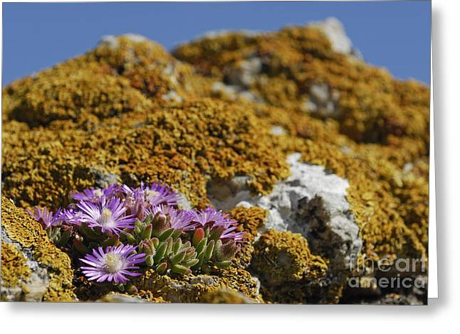Pink Flowers On Mossy Rock Greeting Card by Sami Sarkis