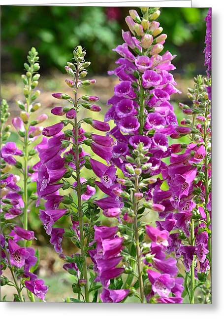 Pink Foxglove Flowers Greeting Card by P S