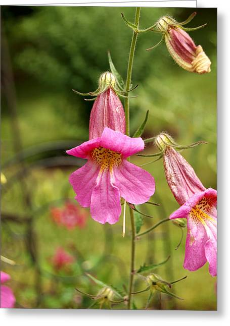 Pink Foxgloves Lover Greeting Card