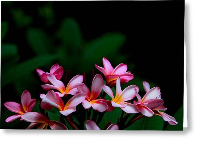 Pink Frangipani Greeting Card by Donald Chen