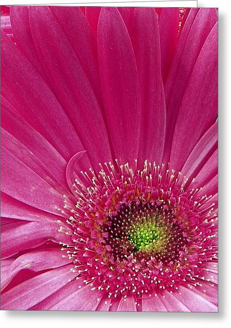 Pink Fusion Greeting Card by Sheri McLeroy
