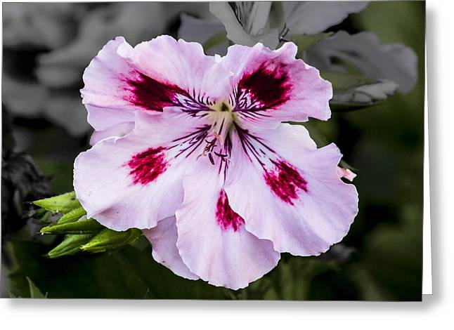 Greeting Card featuring the digital art Pink Geranium by Photographic Art by Russel Ray Photos