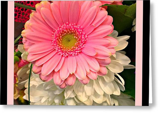 Pink Gerber Daisy Greeting Card