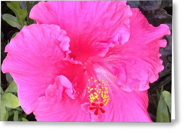 Greeting Card featuring the photograph Pink Hibiscus by Alohi Fujimoto