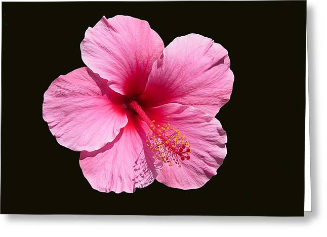 Pink Hibiscus Blossom Greeting Card
