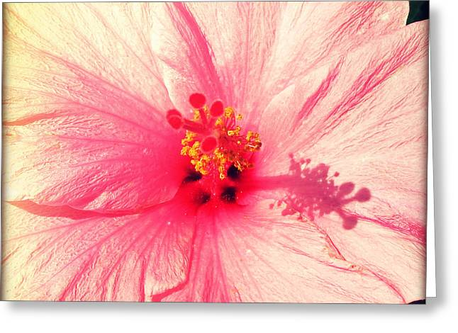 Pink Hibiscus Greeting Card by Chris Andruskiewicz