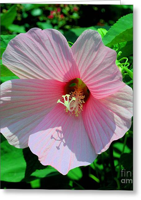 Pink Hibiscus Greeting Card by Luther Fine Art