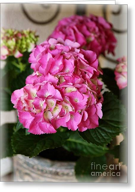 Pink Hydrangea Greeting Card by Carol Groenen