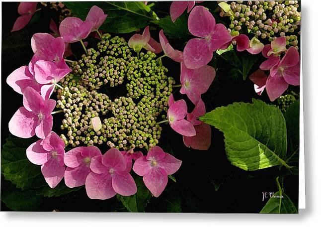 Greeting Card featuring the photograph Pink Hydrangea by James C Thomas