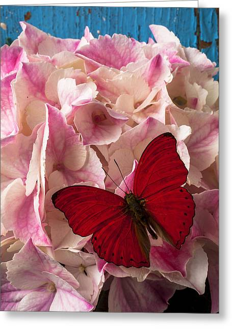 Pink Hydrangea With Red Butterfly Greeting Card by Garry Gay