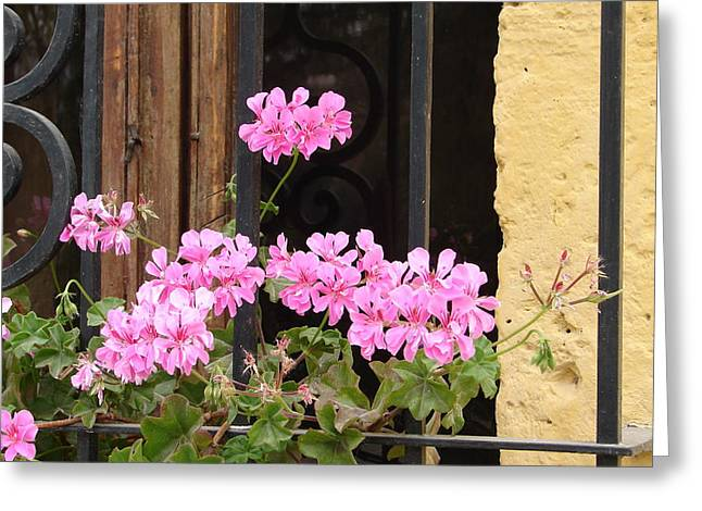 Greeting Card featuring the photograph Pink In My Window by Lew Davis