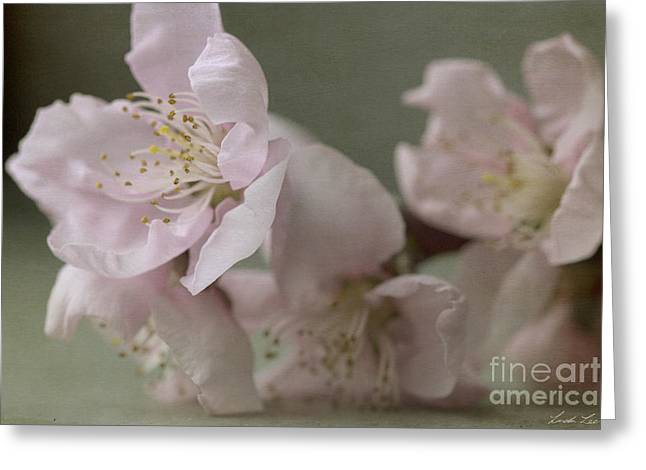 Pink Is The Color Of Happiness Greeting Card by Linda Lees