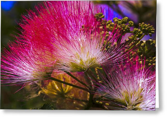 Greeting Card featuring the photograph Pink  by Ivete Basso Photography