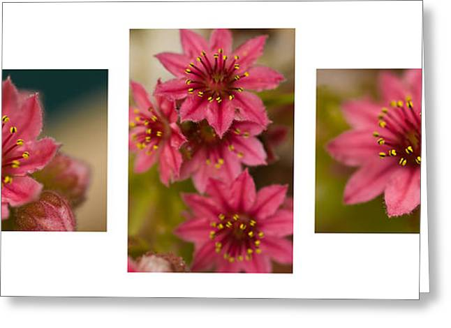 Greeting Card featuring the photograph Pink Joy by Trevor Chriss