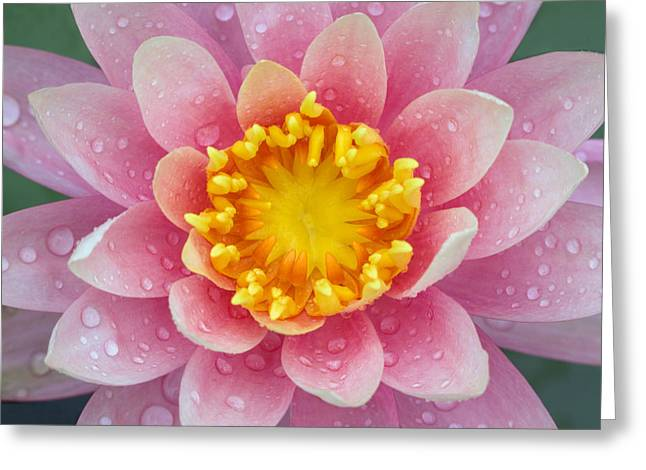 Pink Greeting Card by Karen Walzer