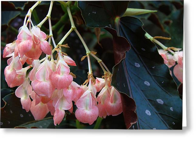 Pink Greeting Card by Kim DePietro