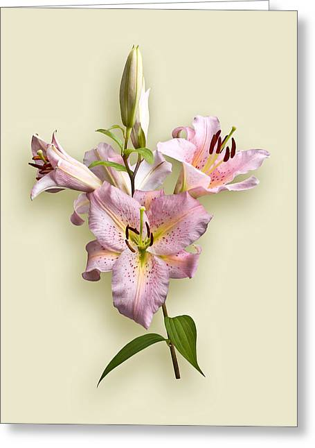 Pink Lilies On Cream Greeting Card by Jane McIlroy