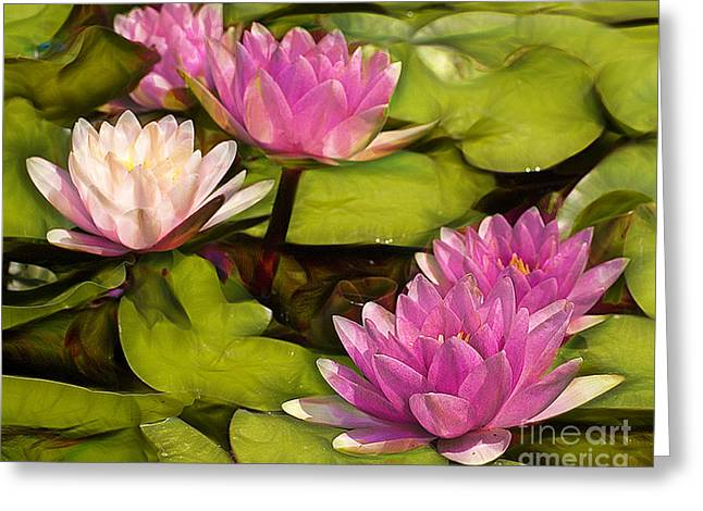 Pink Lotus Blossoms Or Water Lily Flowers Blooming On Pond  Greeting Card