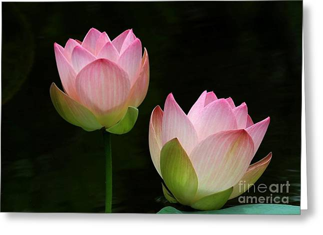 Pink Lotus Duet Greeting Card by Sabrina L Ryan