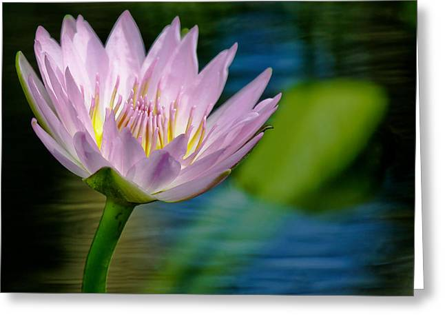 Purple Petals Lotus Flower Impressionism Greeting Card