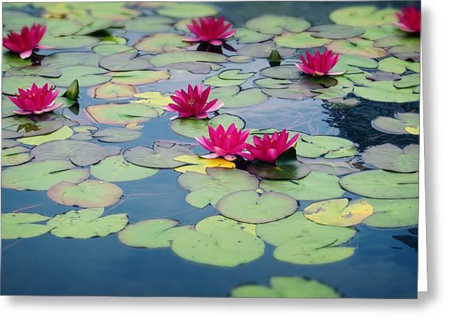 Pink Lotus Flowers Greeting Card by Ray Van Gundy