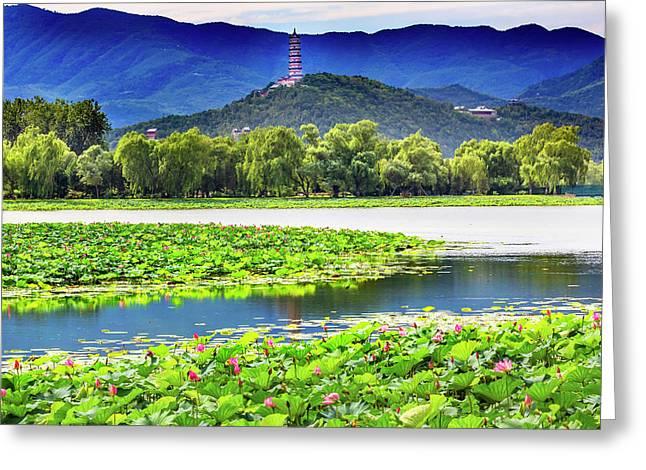 Pink Lotus Pads Garden Reflection Greeting Card
