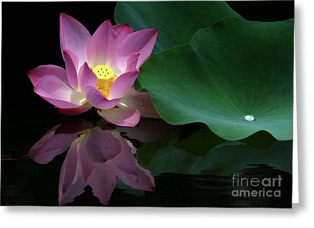 Pink Lotus Reflection Greeting Card by Sabrina L Ryan