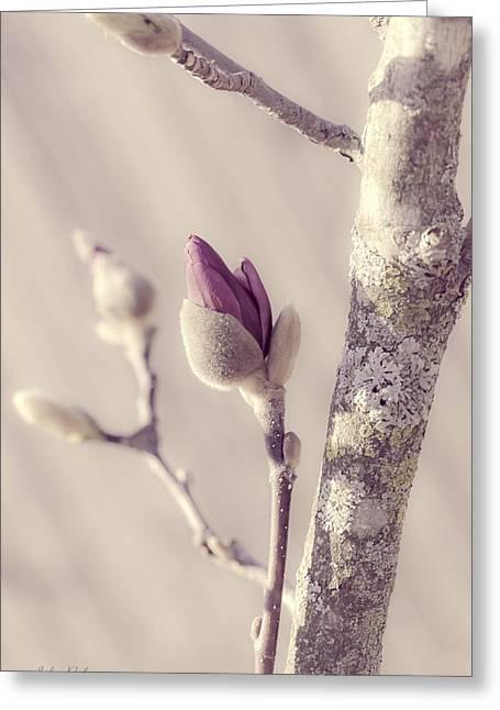 Pink Magnolia Bud  Greeting Card
