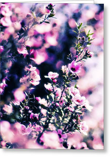 Pink Manuka Flowers Greeting Card by motography aka Phil Clark