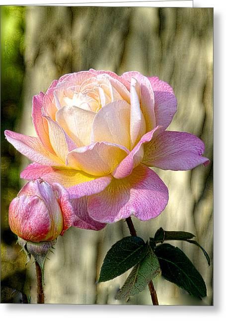 Pink October Rose Greeting Card