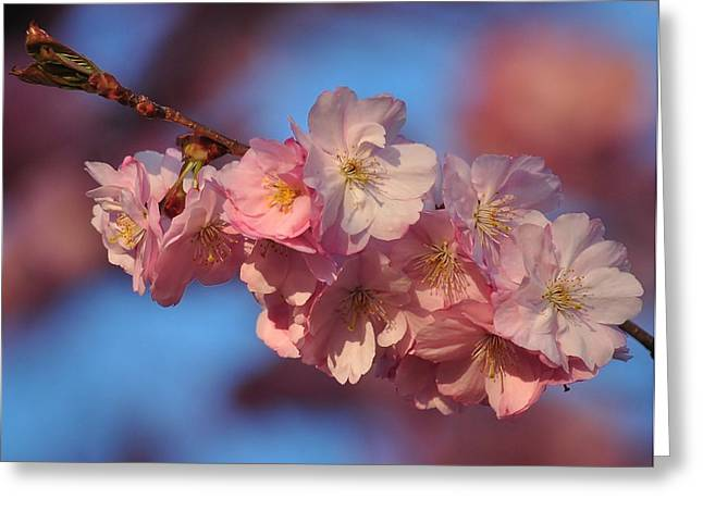 Greeting Card featuring the photograph Pink On Bleu by Paul Noble