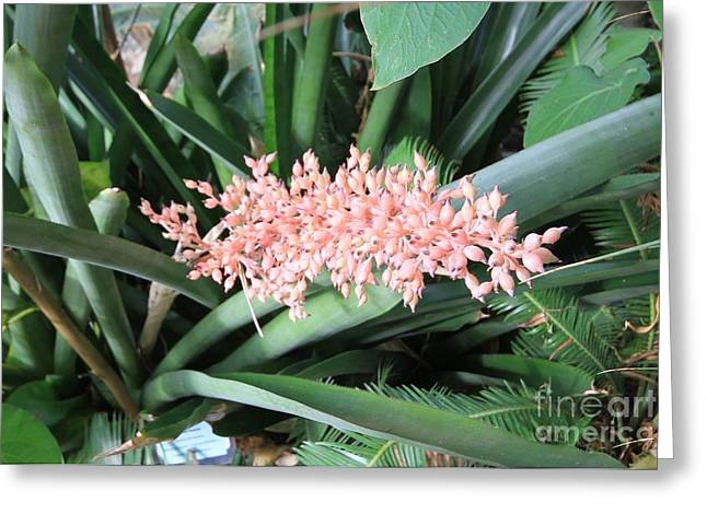 Pink On Green Greeting Card by Butch Phillips