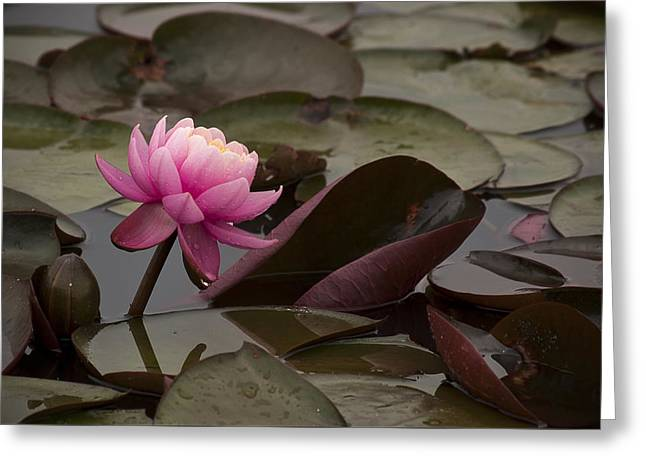 Pink On The Pond Greeting Card