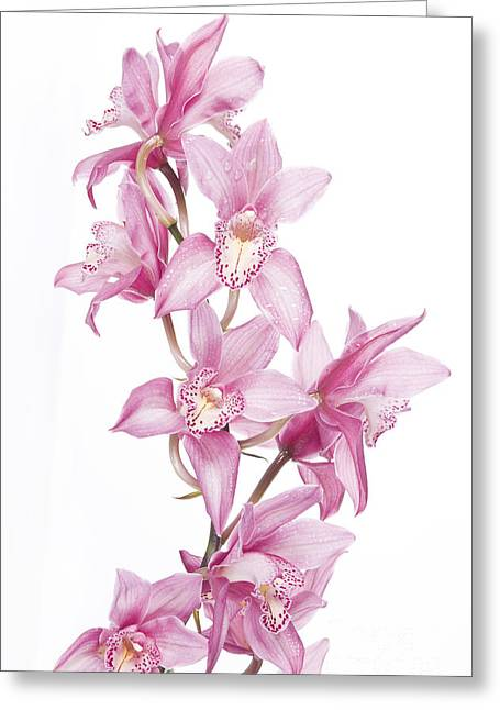 Pink Orchid Greeting Card by Boon Mee