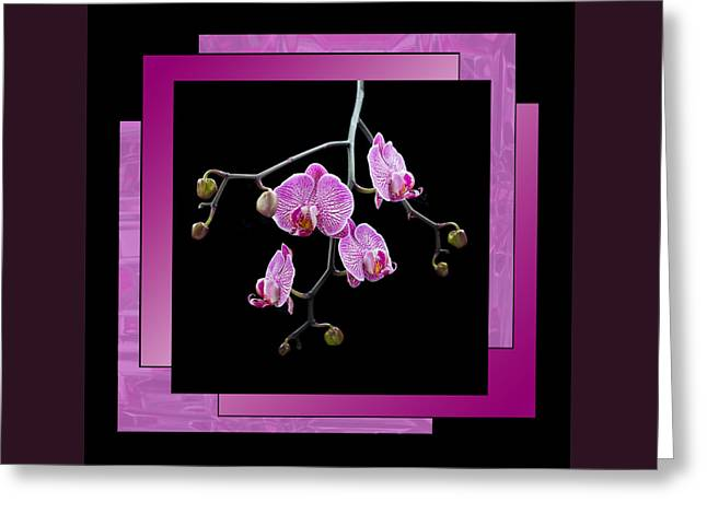 Greeting Card featuring the photograph Framed Orchid Spray by Patti Deters