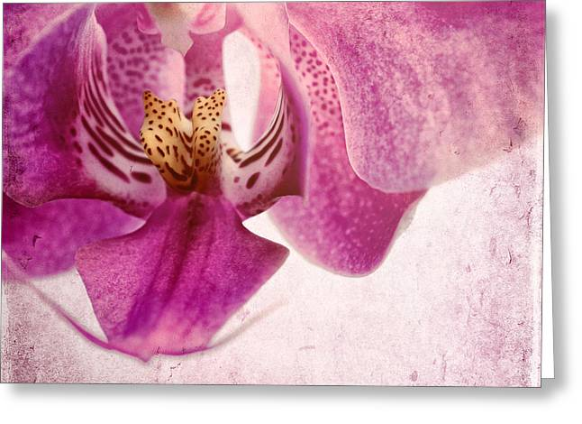 Pink Orchids 6 Greeting Card by Sabine Jacobs