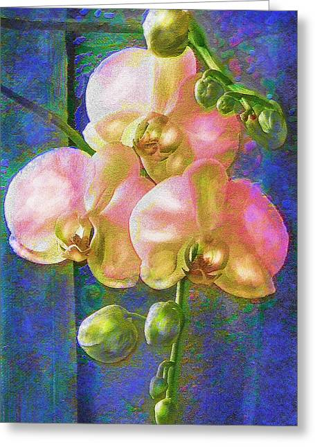 Pink Orchids Greeting Card by Jane Schnetlage