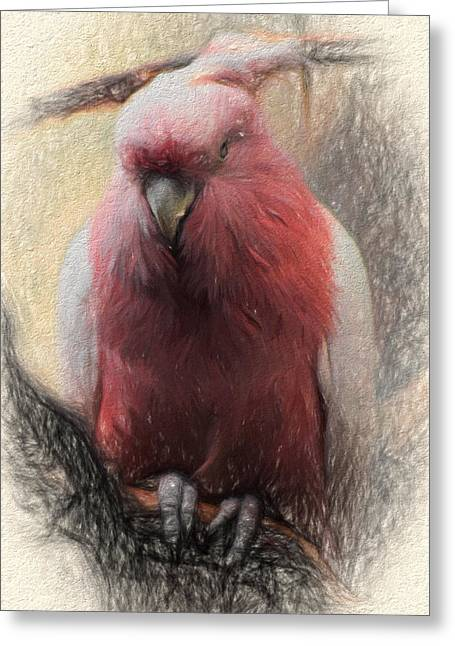 Pink Painted Parrot Greeting Card by Terry Cork